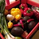 12. Bild: Motto des Urlaubs: gesund ernähren und leben