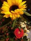 11. Bild: Mit Blumen den Urlaub einleiten ...